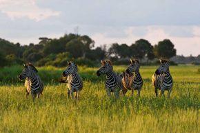 luxe reizen afrika homeLuxe Safari Zuid Afrika.htm #1